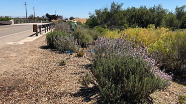 Native Revegetation