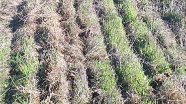 Hydroseeding & Drill Seeding